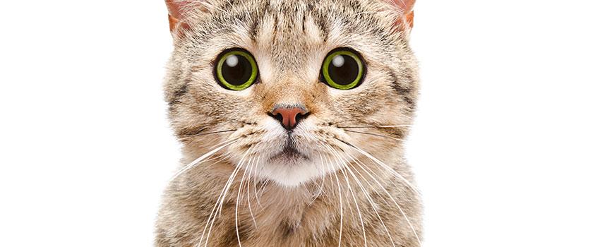 Are Cat Bites Dangerous?